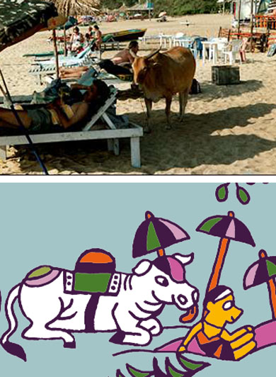 a cow surprise a sun bather on the beach